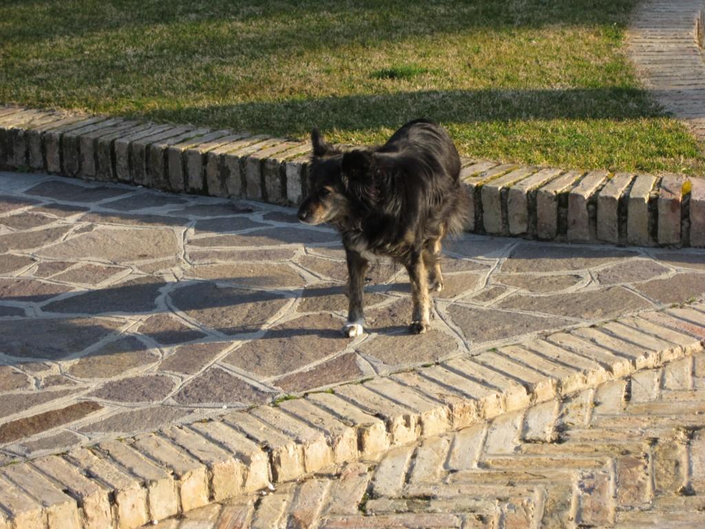 2013-IAM-hotel-dog_0358